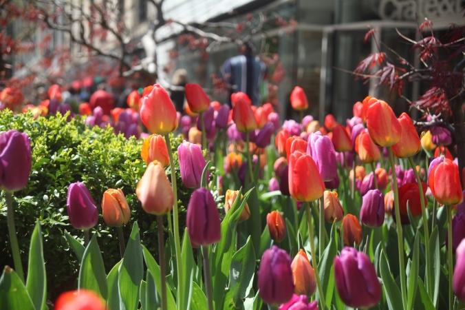 Spring Around Chicago